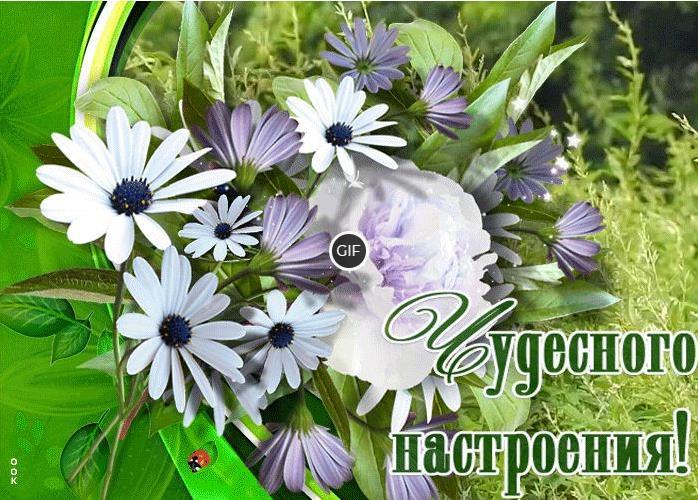 Гифка чудесного настроения с цветами