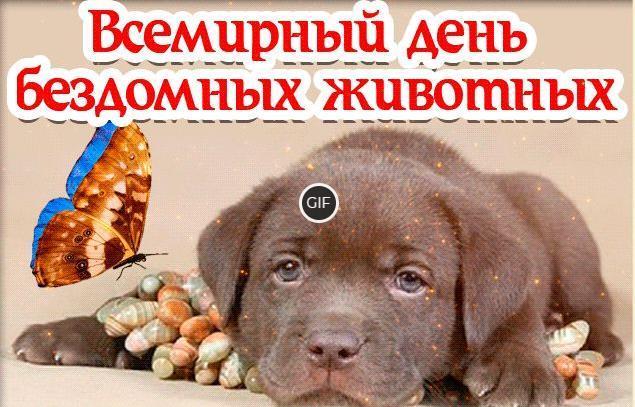 Гифки всемирный день бездомных животных