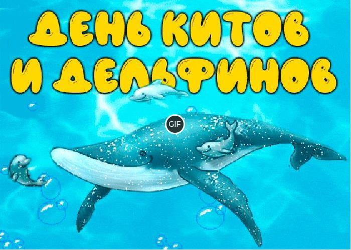 Картинки и открытки с днём китов и дельфинов