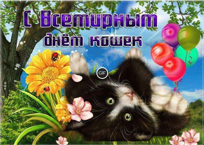 Гифки 8 августа всемирный день кошек