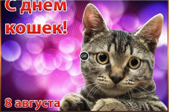 Гифки с международным днем кошек