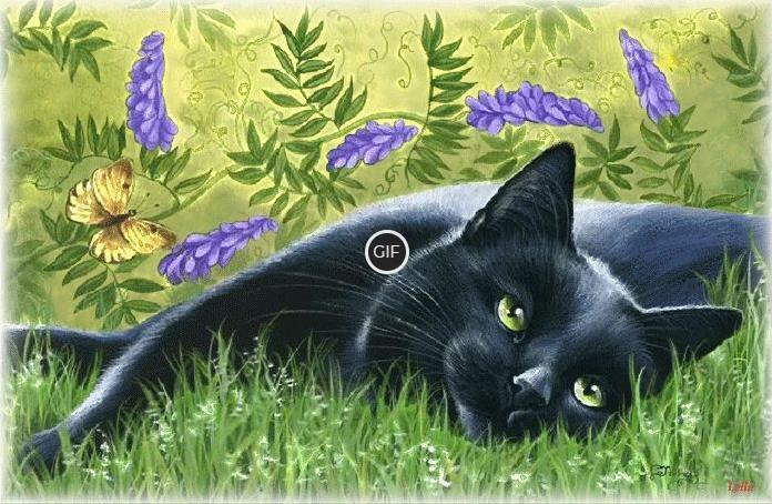 Гифка чёрная кошка в траве