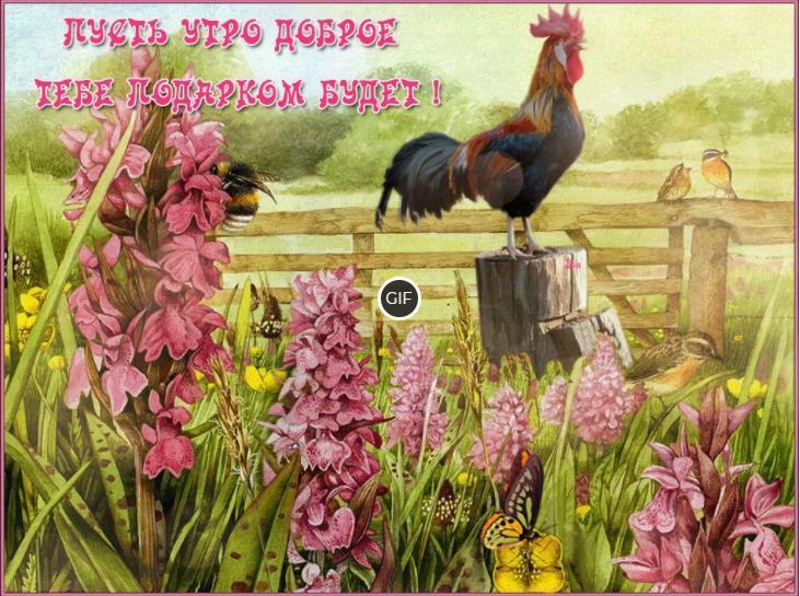 Красивые открытки с добрым летним утром