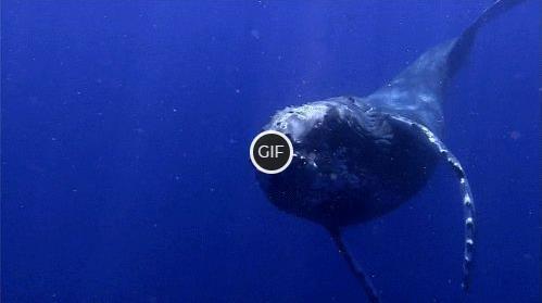 Топ - 10 самых больших китов на планете