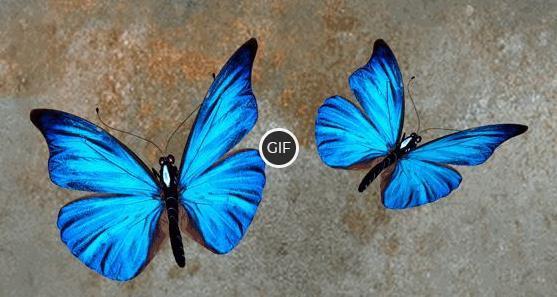 Топ - 10 самых красивых бабочек в мире