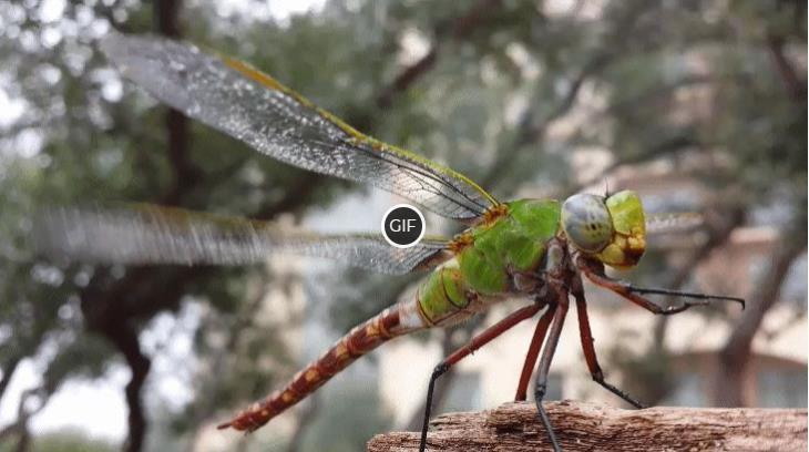 Топ - 10 самых быстрых насекомых в мире