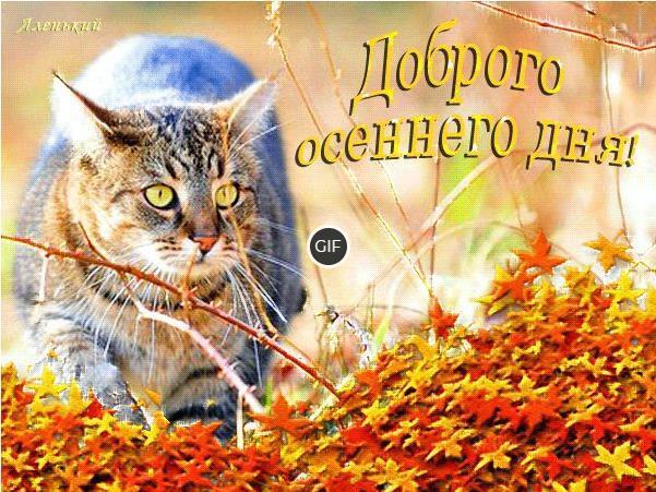 Доброго осеннего дня и вечера картинки