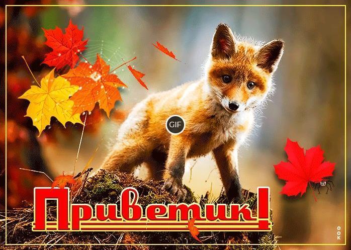 Осенний приветик гиф