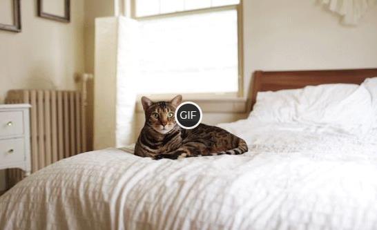 Живая фотография кошка лежит на кровати