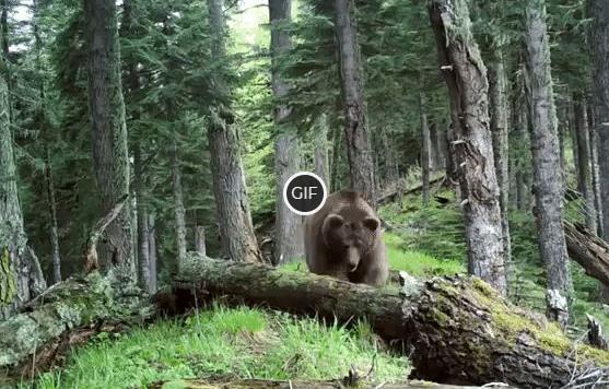"""Фотоловушки: наши """"глаза"""" в природе"""