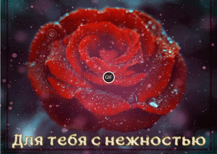 Красивая анимированная картинка эта роза для тебя с нежностью