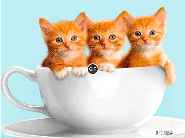Гифка рыжие котята в чашке
