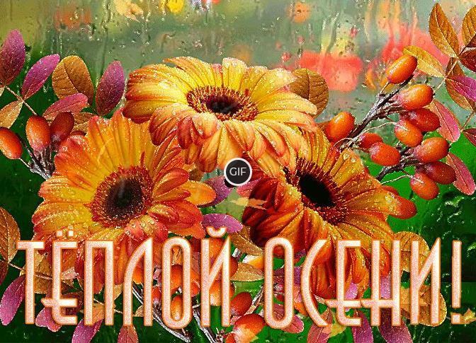 Красивая гиф картинка с пожеланием Тёплой Осени