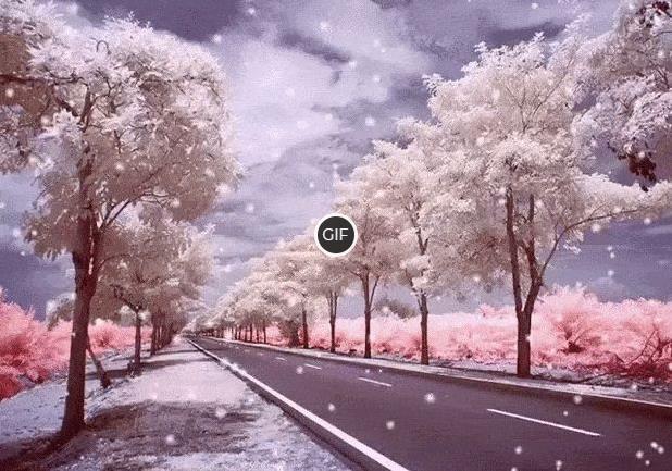 Гифка деревья в снегу