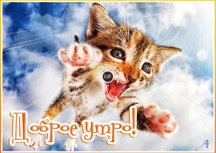 Смешная гиф картинка с добрым утром с котёнком