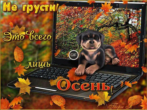 Гифки красивого осеннего листопада