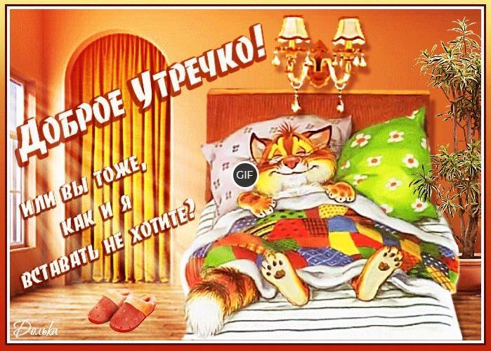 Смешная гиф картинка с добрым утром с котом