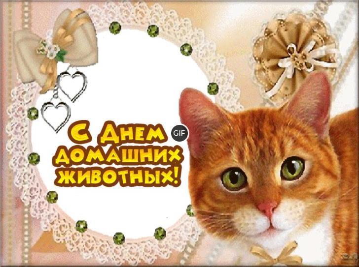 30 ноября день домашних животных картинки