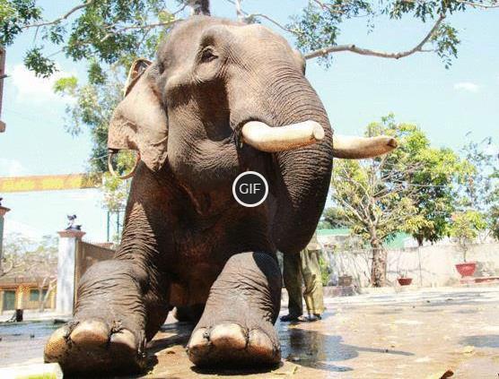 Топ - 10 самых крупных животных в мире