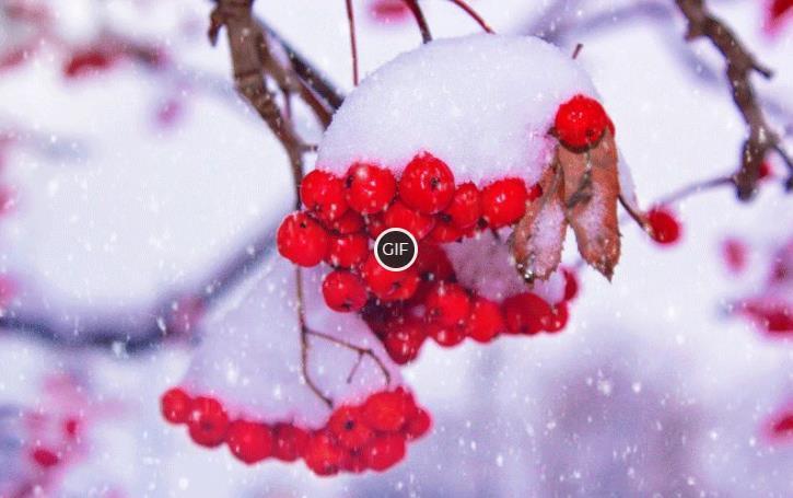 Анимационные картинки зимней природы