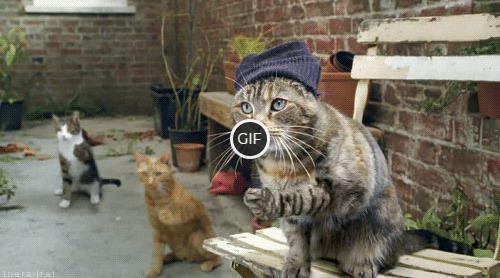 Смешные гифки с котами