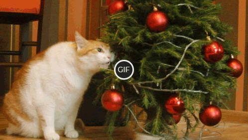 Гифки новогодние коты