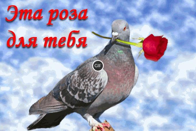 Красивая гиф картинка эта роза для тебя