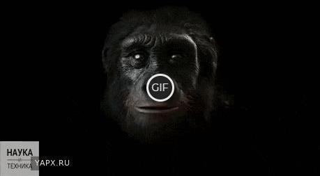 Гиф 6 миллионов лет человеческой эволюции