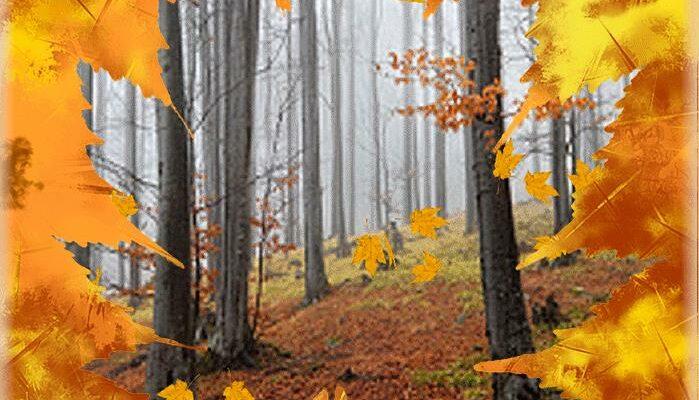 Картинки осенние листья в лесу анимация